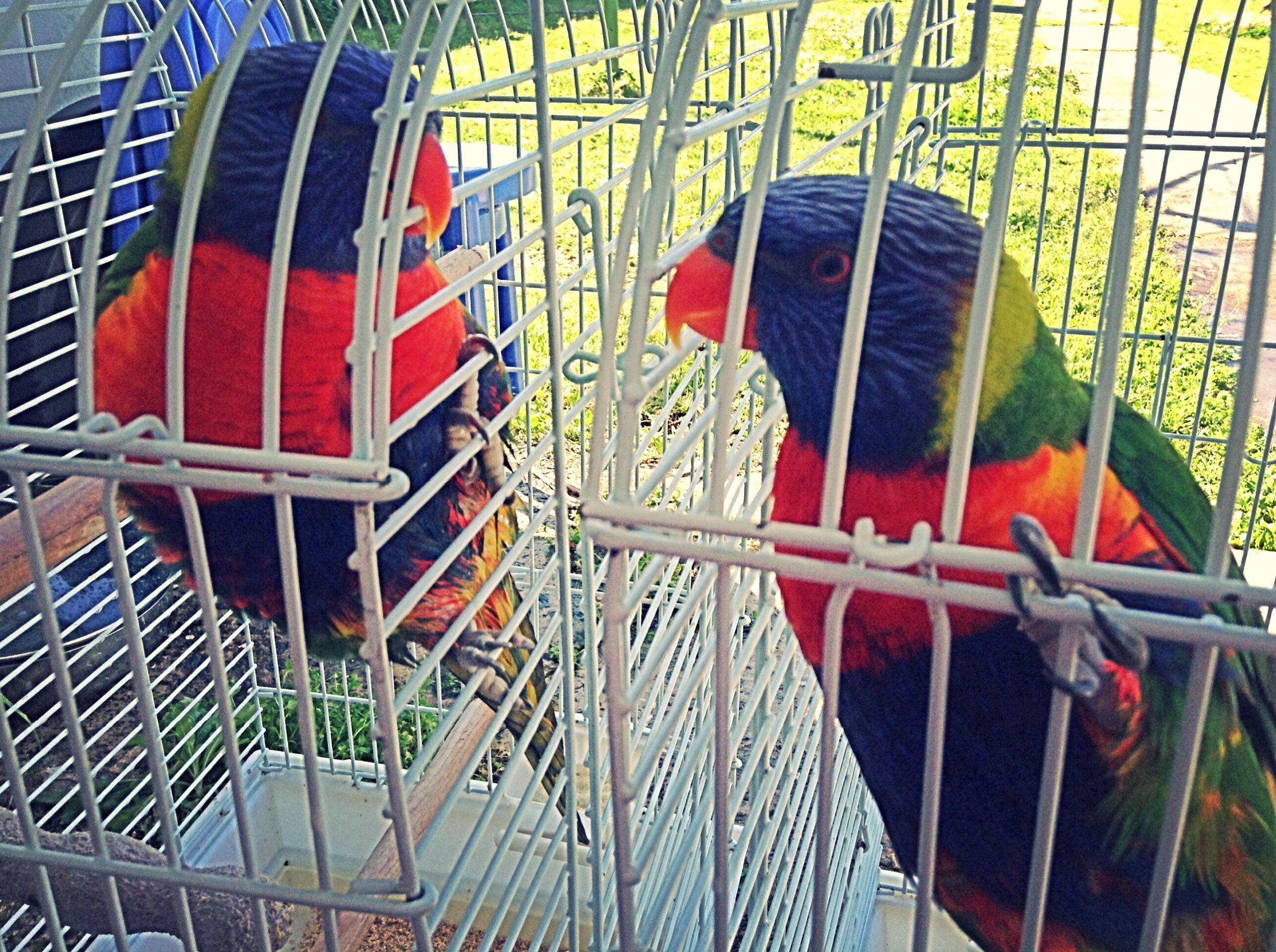 """""""La libertad de los pájaros"""""""